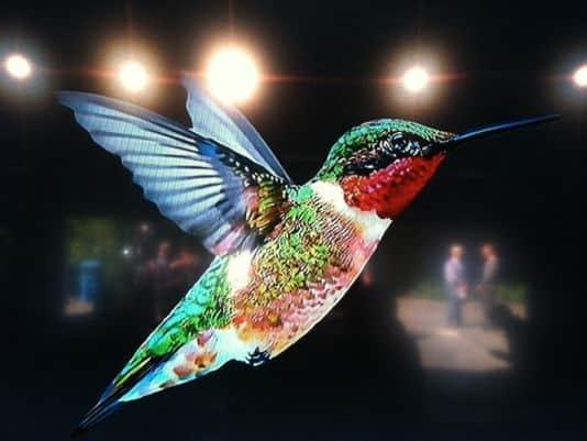 خوارزمية الطائر الطنان في جوجل