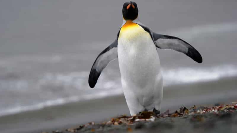 تحديث البطريق